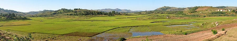 Panoramic view of green, irrigated rice paddies in a floodplain between hills