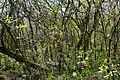 Landschaftsschutzgebiet Röderhofer Teiche und Egenstedter Forst - Sonnenberg-Wäldchen (9).JPG