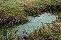 Landschap De Stroopers te Kemzeke - 371888 - onroerenderfgoed.jpg