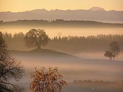 Landstetten, Drumlin-Buche HB-02.jpg