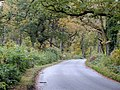 Lane close to Bedwyn Woods - Nov 2012 - panoramio.jpg