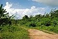 Langkawi, Kedah, Malaysia - panoramio - jetsun (60).jpg