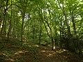 Las Lipowy Muszyna.jpg