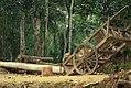 Lauachara Forest 2011.jpg