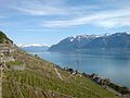 Lavaux and Lake Geneva.jpg