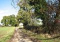 Leafy Oak Lane - geograph.org.uk - 1565490.jpg