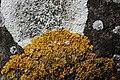 Lichen (29649720547).jpg