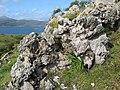 Limestone outcrop - geograph.org.uk - 901042.jpg