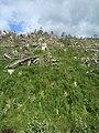Logging in Haida Gwaii (26944749324).jpg