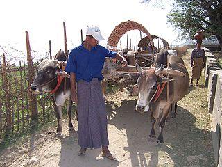 cylindrical hip-wrap worn in Myanmar