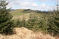 Looking from Cumrie Plantation towards Whitehill - geograph.org.uk - 768582.jpg