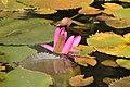 Lotus Flower 3.jpg