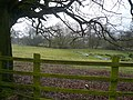 Love Lane - View across field towards Brook - geograph.org.uk - 670635.jpg