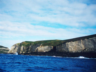 A volcanic island in New Zealand