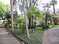 Madeira em Abril de 2011 IMG 1712 (5663741338).jpg