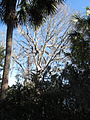 Magnolia Plantation and Gardens - Charleston, South Carolina (8556518386).jpg