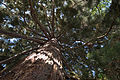 Mainau - Arboretum - Wald 001.jpg