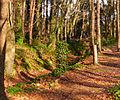 Malahide Castle Woods Bokehrama (27mm f 0.45) (6956900015).jpg