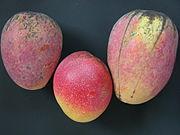 Mango02 CS HD CS Asit.jpg