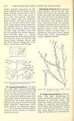Manual of the grasses of the United States (Page 152) BHL42020791.jpg