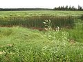 Marshes near Mount Stewart, PEI (9384410138).jpg