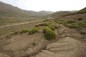 Jbel Bou Iblane - Vegetation on the slopes of Mount Bou Iblan