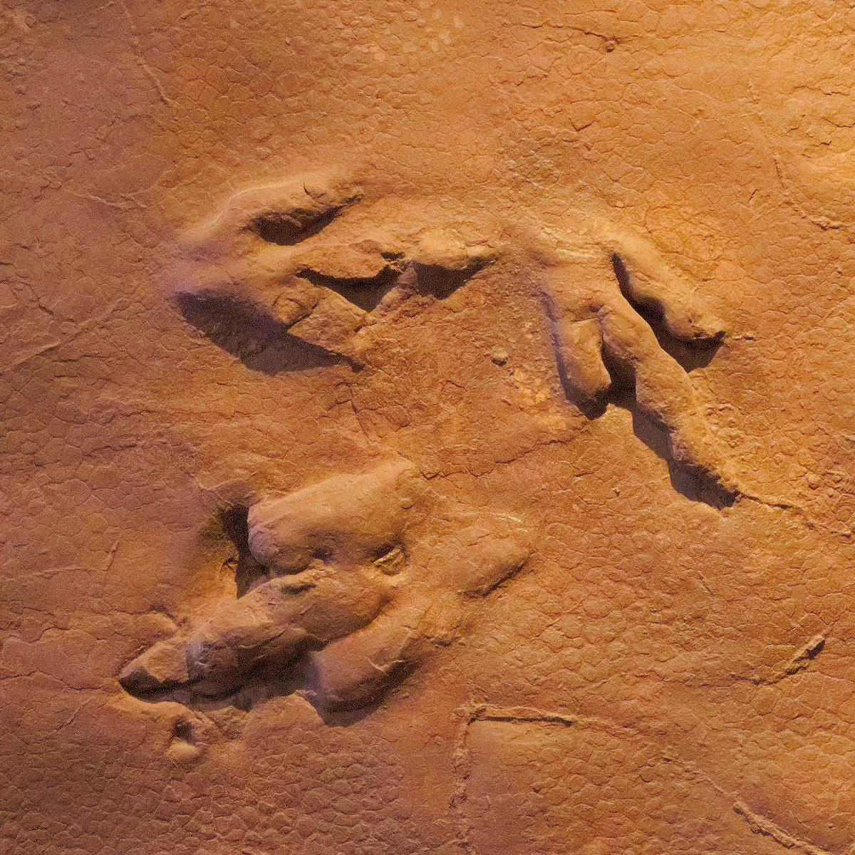 St George Dinosaur Discovery Site Wikipedia
