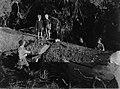 Men cutting kauri tree with children watching (AM 88380-1).jpg