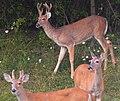 Mentor Marsh Nature Preserve (9597671538).jpg