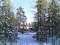 Metsäpolku - panoramio - jampe.jpg