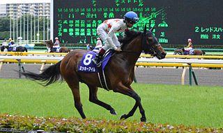 Mikki Isle Japanese-bred Thoroughbred racehorse