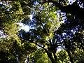 Minamurra Rainforest - panoramio.jpg
