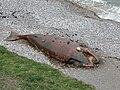 Minke whale - geograph.org.uk - 429954.jpg
