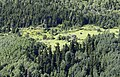 Mixed forest in Asarcık, Şebinkarahisar 02.jpg