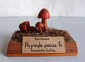 Modell von Hygrocybe punicea (Granatroter Saftling, Granatrote oder Größte Saftling).jpg