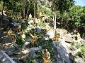 Monastery of Ten Thousand Buddhas 萬佛寺 (5379638115).jpg