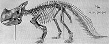 Montanoceratops skeleton.jpg