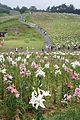 Mount Hakodate Shiga Pref02n.jpg