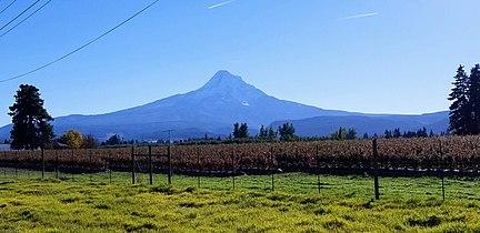 Mount Hood (as seen from Mount Hood, Oregon).jpg
