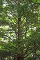 Mountaintop Forest (1) (9525597043).jpg