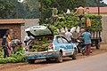 Mouyondzi. Chargement de régimes de bananes à destination de Pointe-Noire.jpg