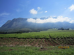 Mulanje Mountain.JPG