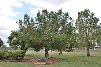 Mundubbera - Lone Pine memorial at Mundubbera, 2008