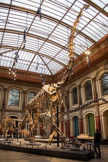 <i>Giraffatitan</i> Sauropod dinosaur genus from the late Jurassic Period