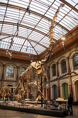 Giraffatitan - Mounted skeleton, Berlin's Natural History Museum