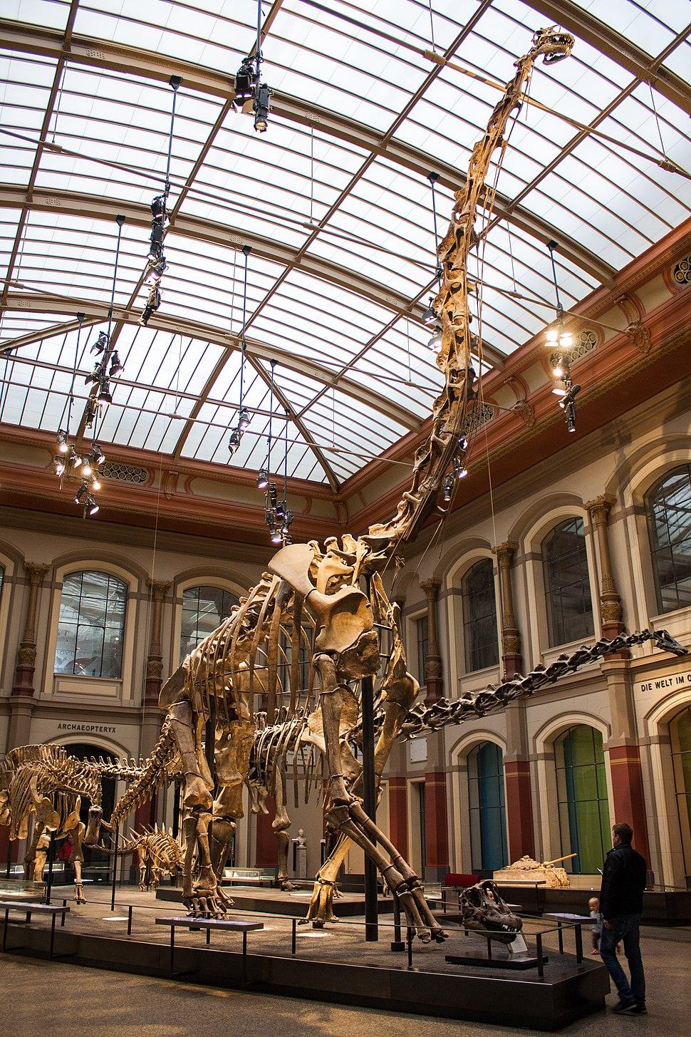 Museum für Naturkunde (36556352434)