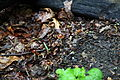 Mushrooms-macro-forest - West Virginia - ForestWander.jpg