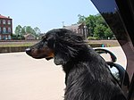 My Favorite Dog - panoramio.jpg