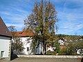 ND Kastanie im Schlosshof - Daetzingen.jpg