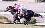 1996年3月9日 阪神競馬場(阪神大賞典)